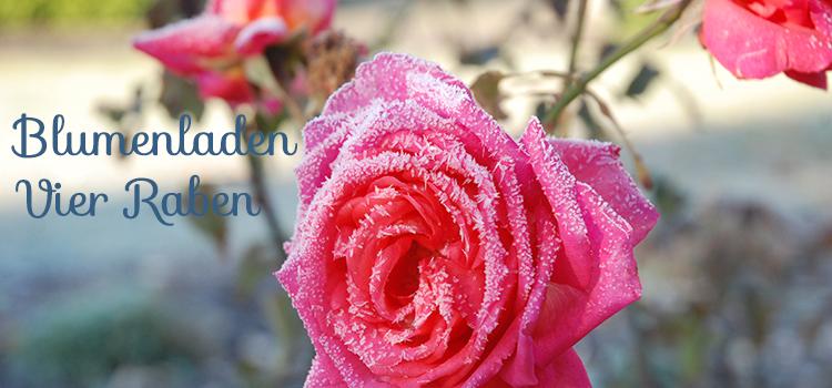 Blumenladen-Vier-Raben