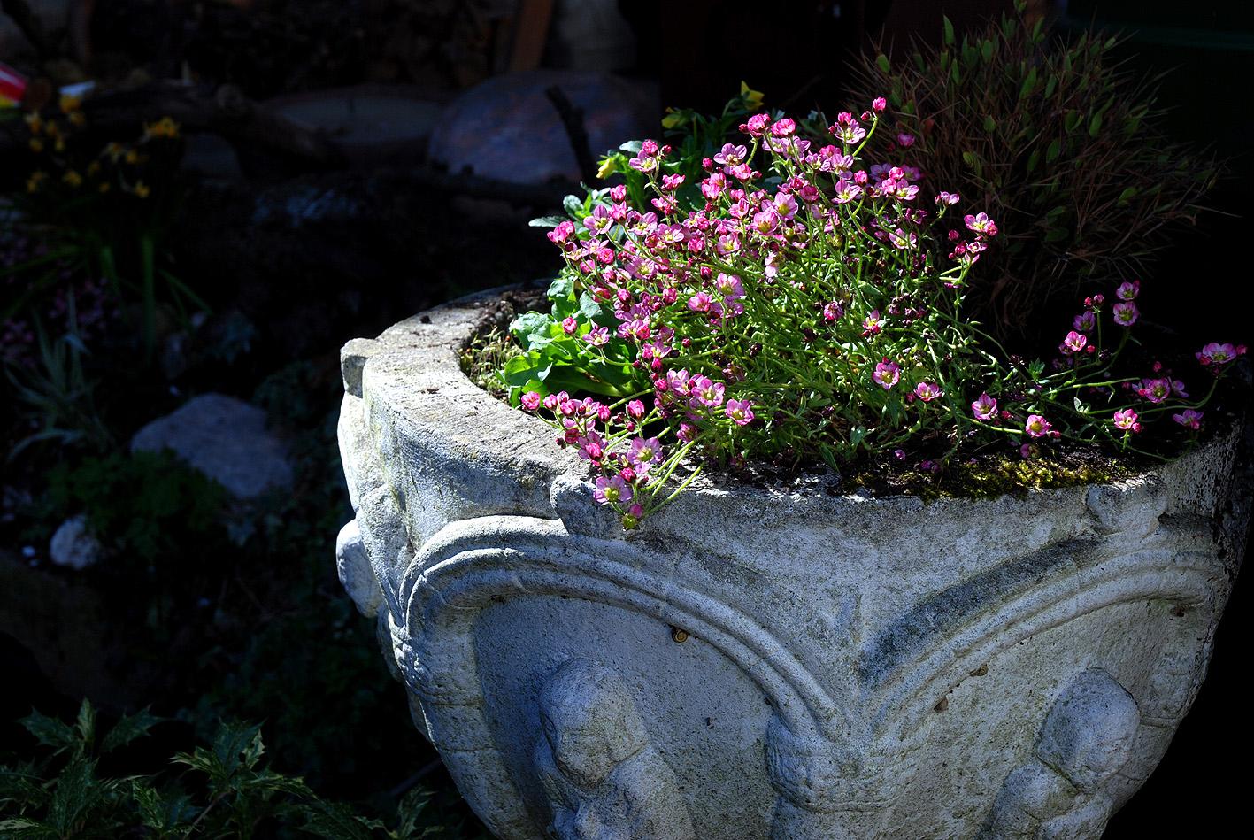 Vier Raben - Blühende Steingutschale